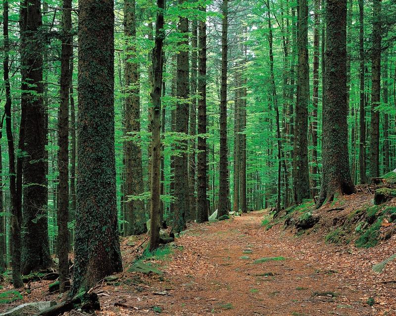 Pix_-_Forest.jpg