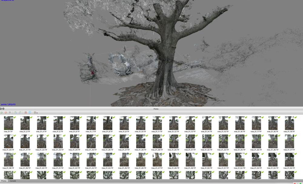 Photogrammetry tree from physical protest site