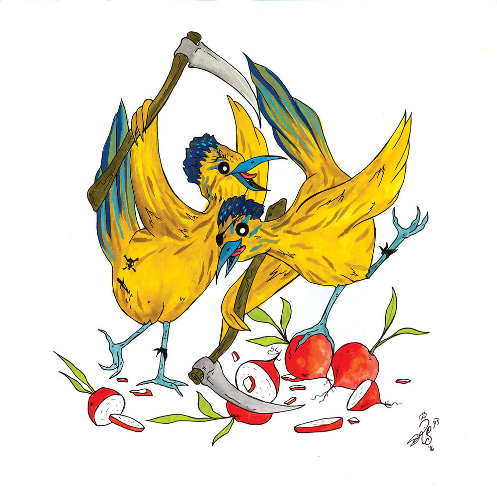 R is for Ragging renegade roadrunners reap reluctant radishes