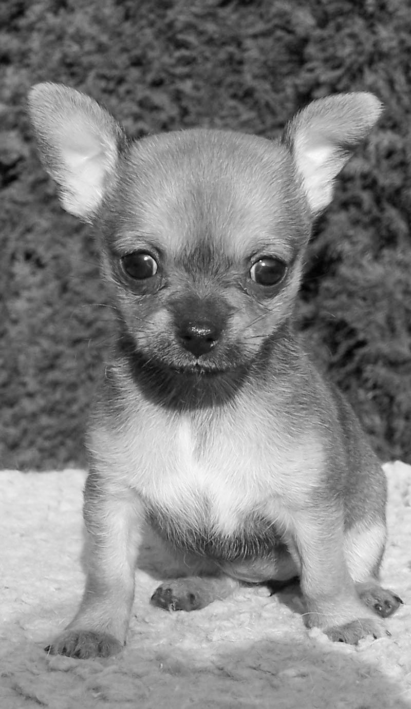 tiny dog.jpg