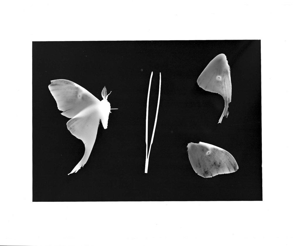 """Sadistic"" Darkroom print, 2017"