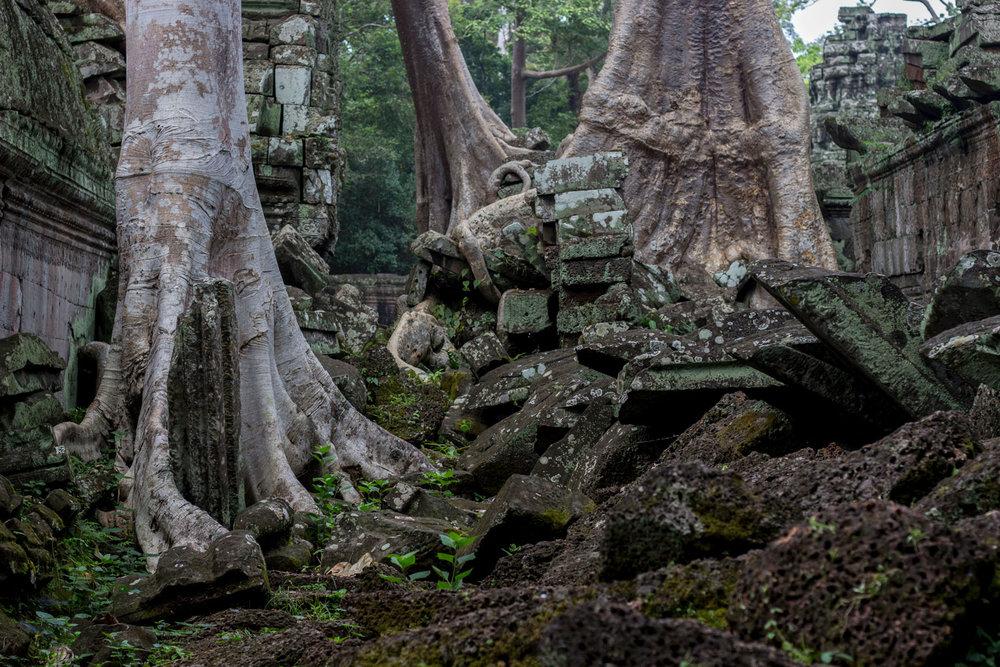 The Trees and Ruins of Ta Prohm