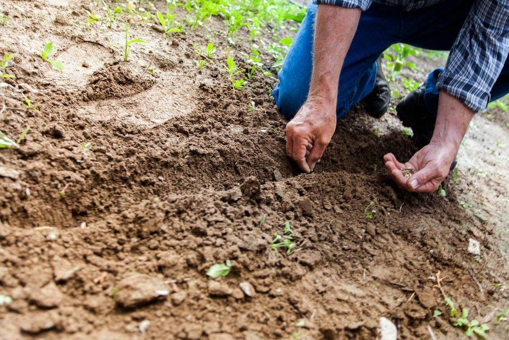 planting seeds.jpeg