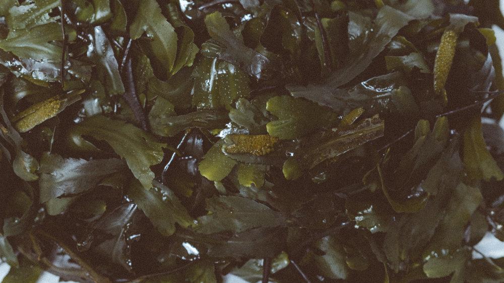 Voya 'Lazy Days' Seaweed Bath