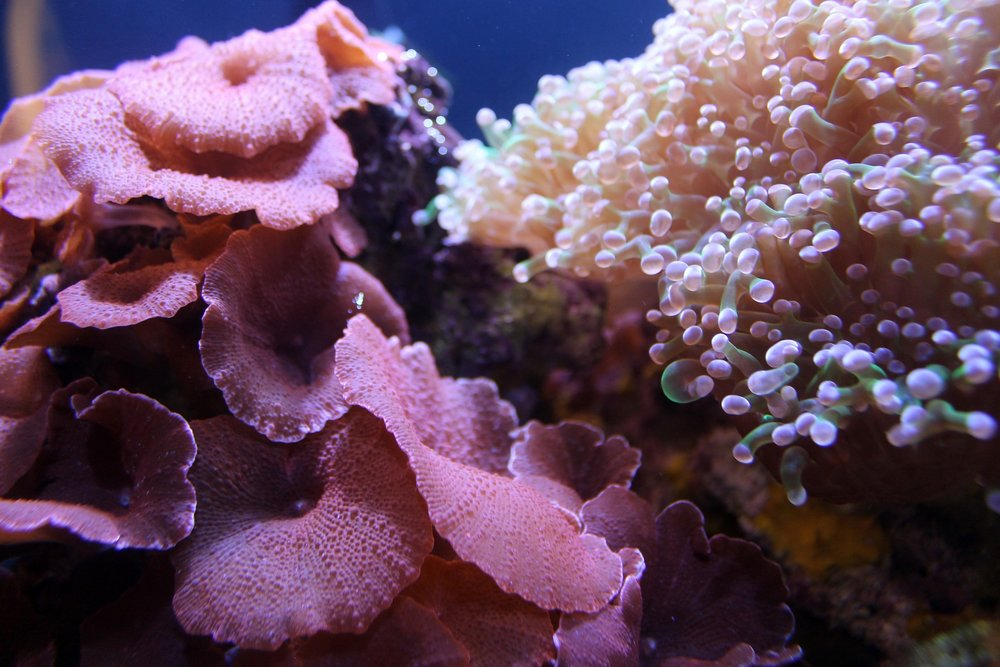 Protect our Coral Reefs. -
