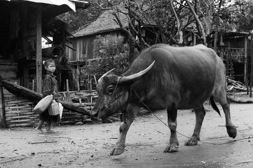 Girl and buffalo in an Ann village