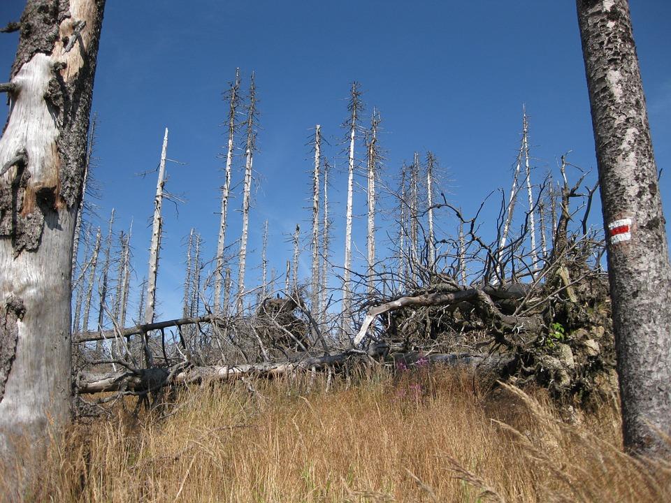 dying-tree-557848_960_720.jpg