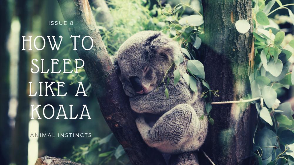 How To Sleep Like A Koala