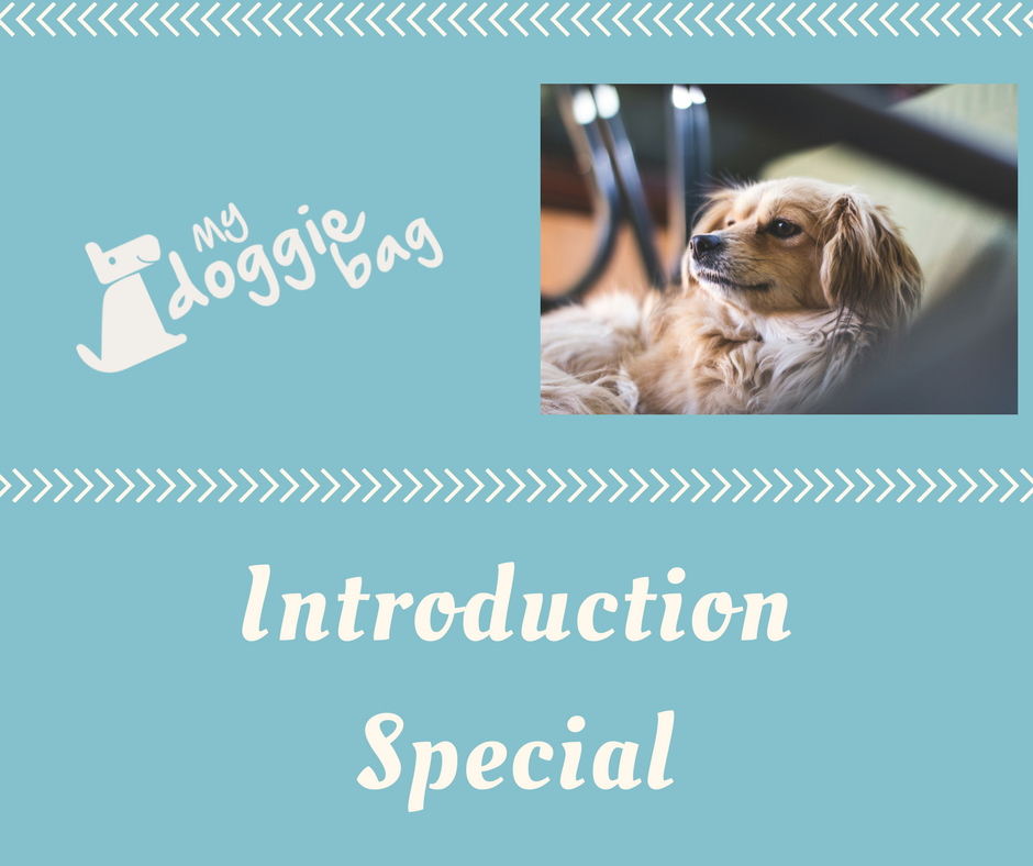 Introduction Special Because we love what we do and because you love your dog ( ideal combination) you recieve 50% off, if you order two boxes of the same size for your first order. This way you can share it with a f.png