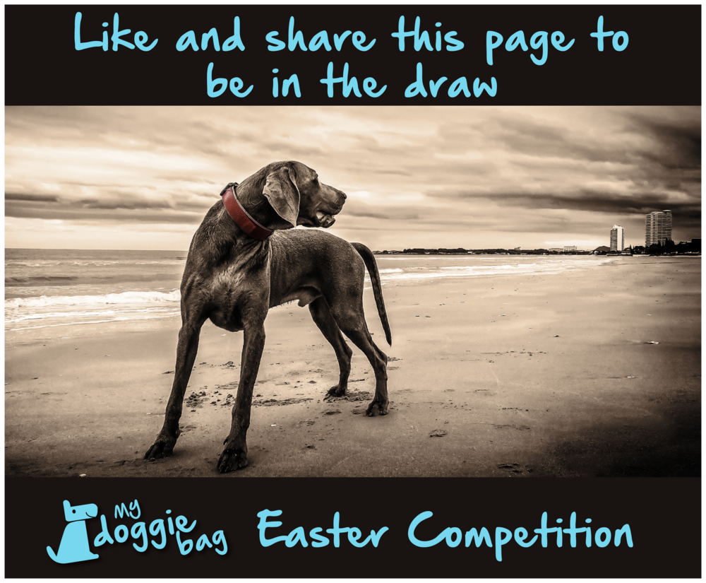 My Doggie bag photo competition