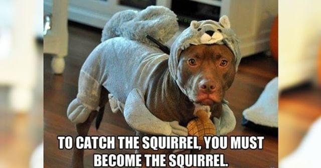 #mydoggiebag #mydoggiebagnz #doglovers  #dogdays  #doggylove #dogslover #dogselfie #dogsrule  #dogslife #doggram #dogsandpals #dogsarethebest #dogcollar  #doglife  #dogtrainer #doglove #dogloversofinstagram  #fordogs  #healthyfoodfordogs #petfood #petsnack #dogbiscuit #dogsnack #homemadedogtreats #dogtreat #cutedog #100natural #healthysnack  #pettreats #nopreservatives