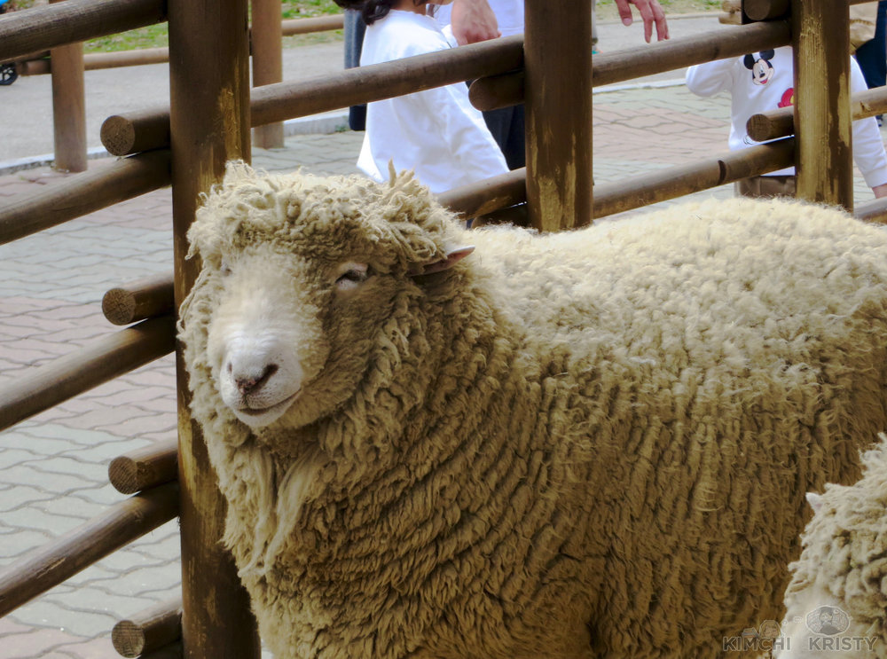 smilingsheep.jpg