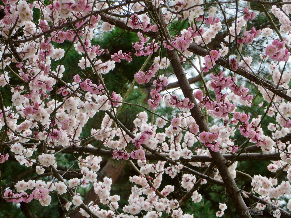 blossoms5.jpg