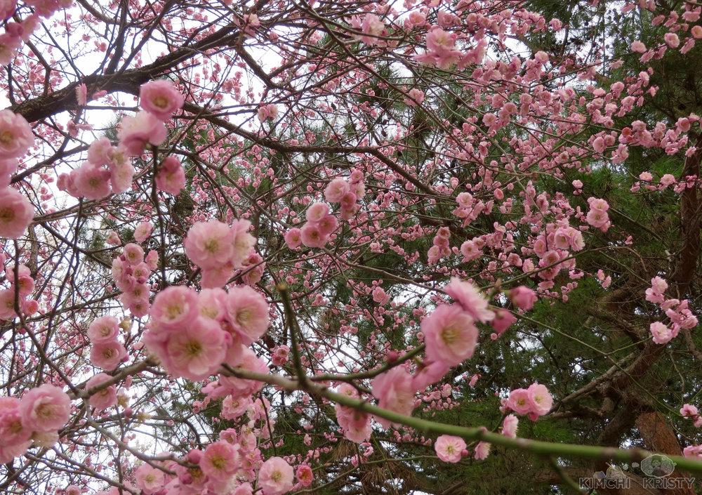 blossoms6.jpg