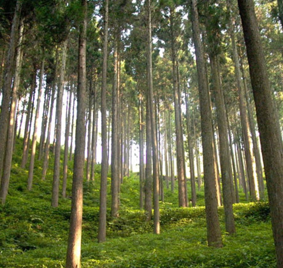 備後圏域森林林業等基礎調査('15 広島県福山市) - 備後圏域の林業事業体、木材市場、製材事業所、建材販売店の実態を調査し、森林資源を地域内で活用していく方策を検討しました。木材市場に地元産材を集約し、製材事業所が競り購入する流れをつくることが必要であると提案しました。