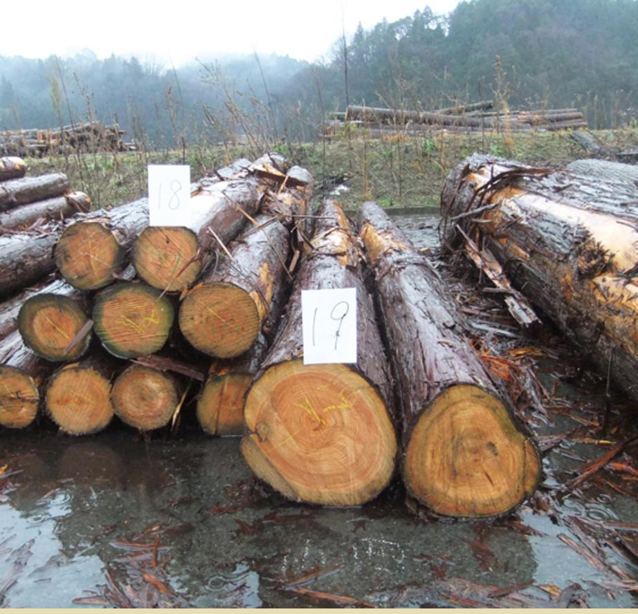 中国地域木質バイオマス発電利用等実態調査('10 中国経済産業局) - 中国地方で稼働しているバイオマス発電事業所を調査し、バイオマス材の調達エリアを把握しました。バイオマス材の競合の実態から、バイオマス発電の将来性を判断する報告を行いました。