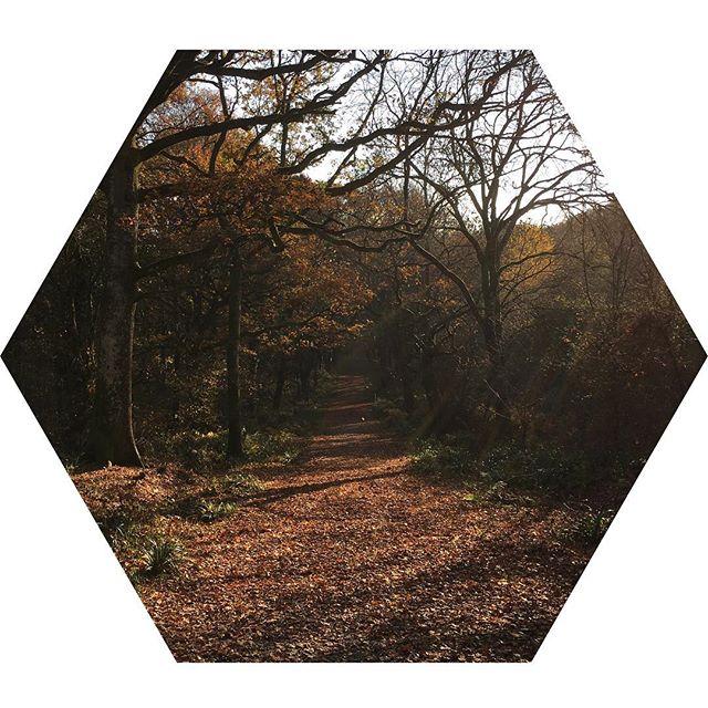 📌 Sunday Stolls  The hardest decision I'm making today is which beauty spot to choose for the dog walk 🤷🏻♀️ _________________________________________________⠀ ⠀ #sunday #sundayvibes #sundaymood #countrylife #walks #dorset #familytime #beautyspot  #nature #autumnal  #freelancewriting #freelancewriter #writer  #writerslife #writerscommunity #bloggersuk #blogger