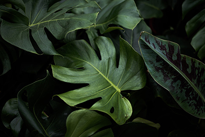 leafs.jpeg