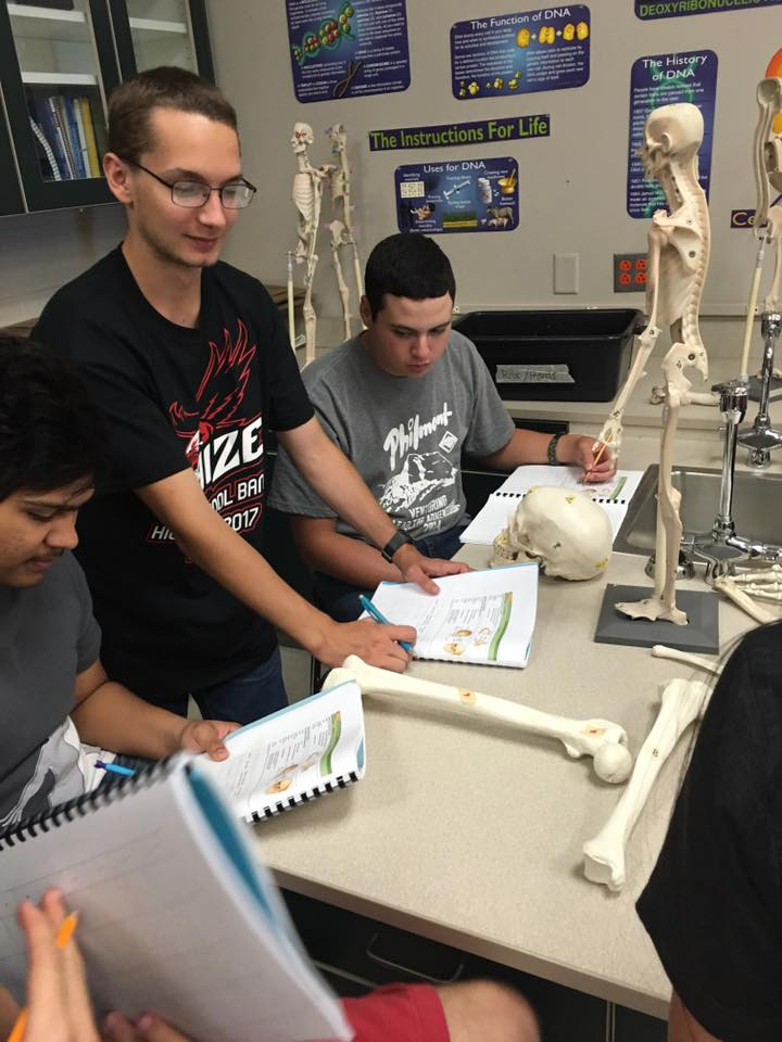 Students examine replica skeletal models for anatomy classes.