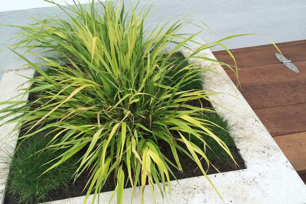 Cat Datta - plants