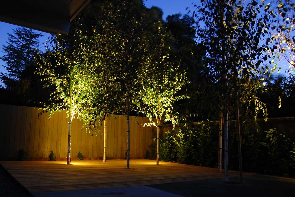 lighting-trees.jpg