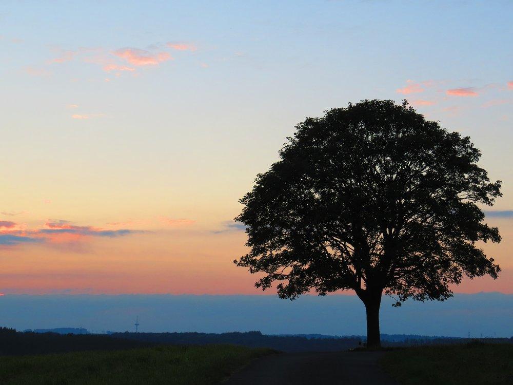 sunset-2690086_1920.jpg