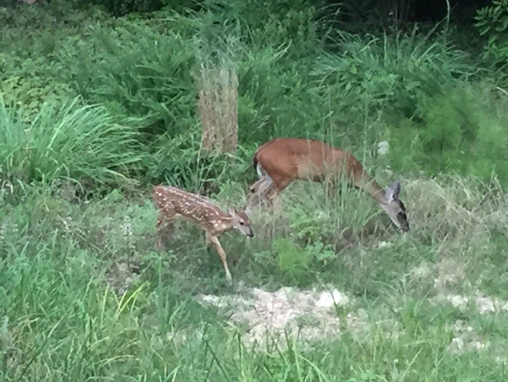 deer 22.jpg