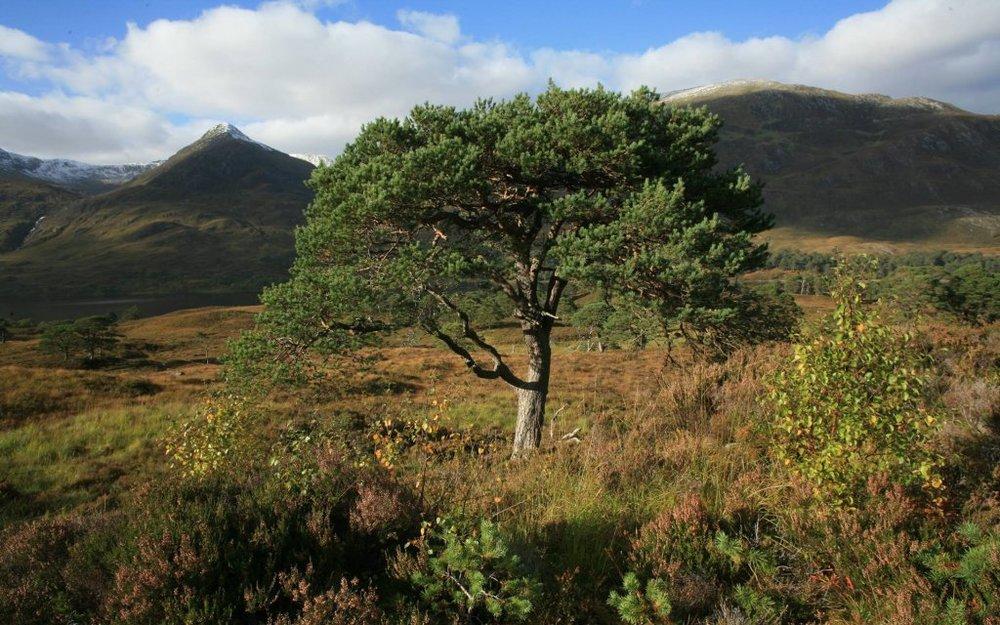 trees for life.jpg