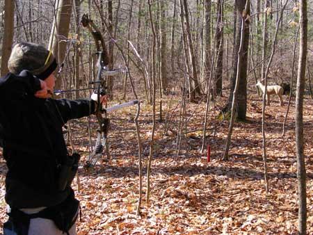 3D Archery 002.jpg