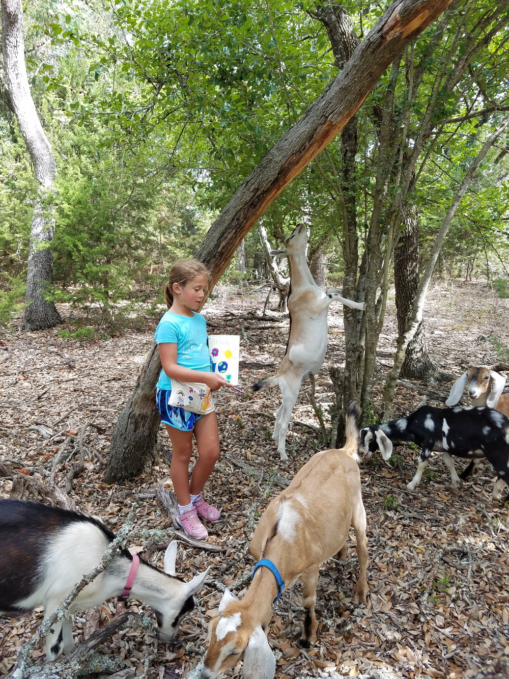 The children loved walkin' and talkin' and noticing all kinds of unexpected behaviors from goats including the fact that they stand on their hind legs and eat from trees.