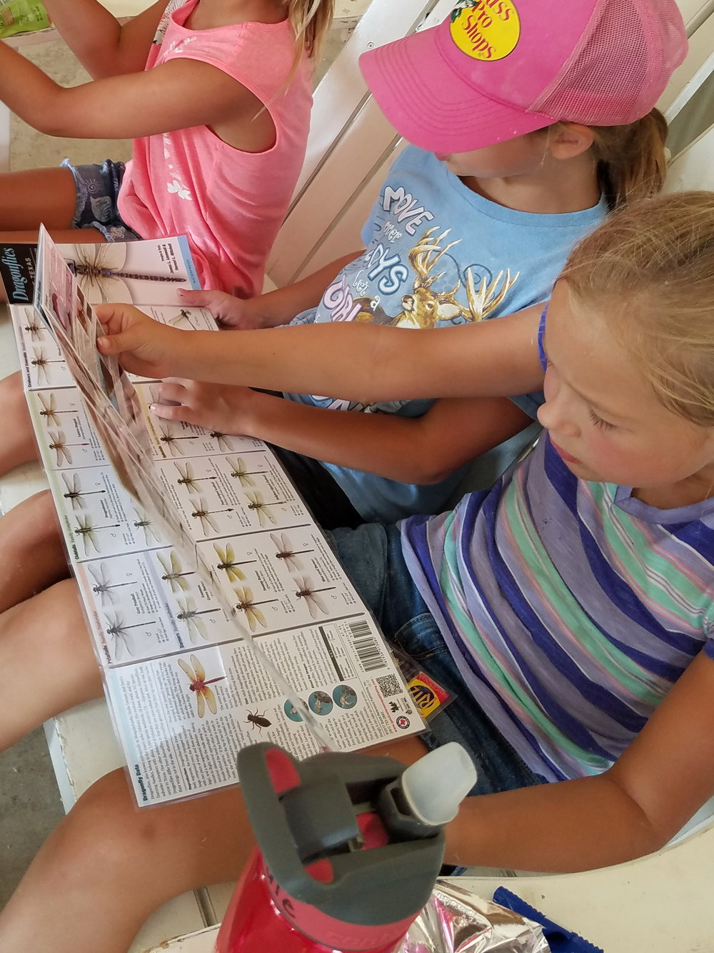Every time the children noticed an animal or insect that they didn't recognize, they gathered together to consult their field guides to make proper identification. Everyone learned that even though something may be poisonous or venomous, it still has a purpose too.