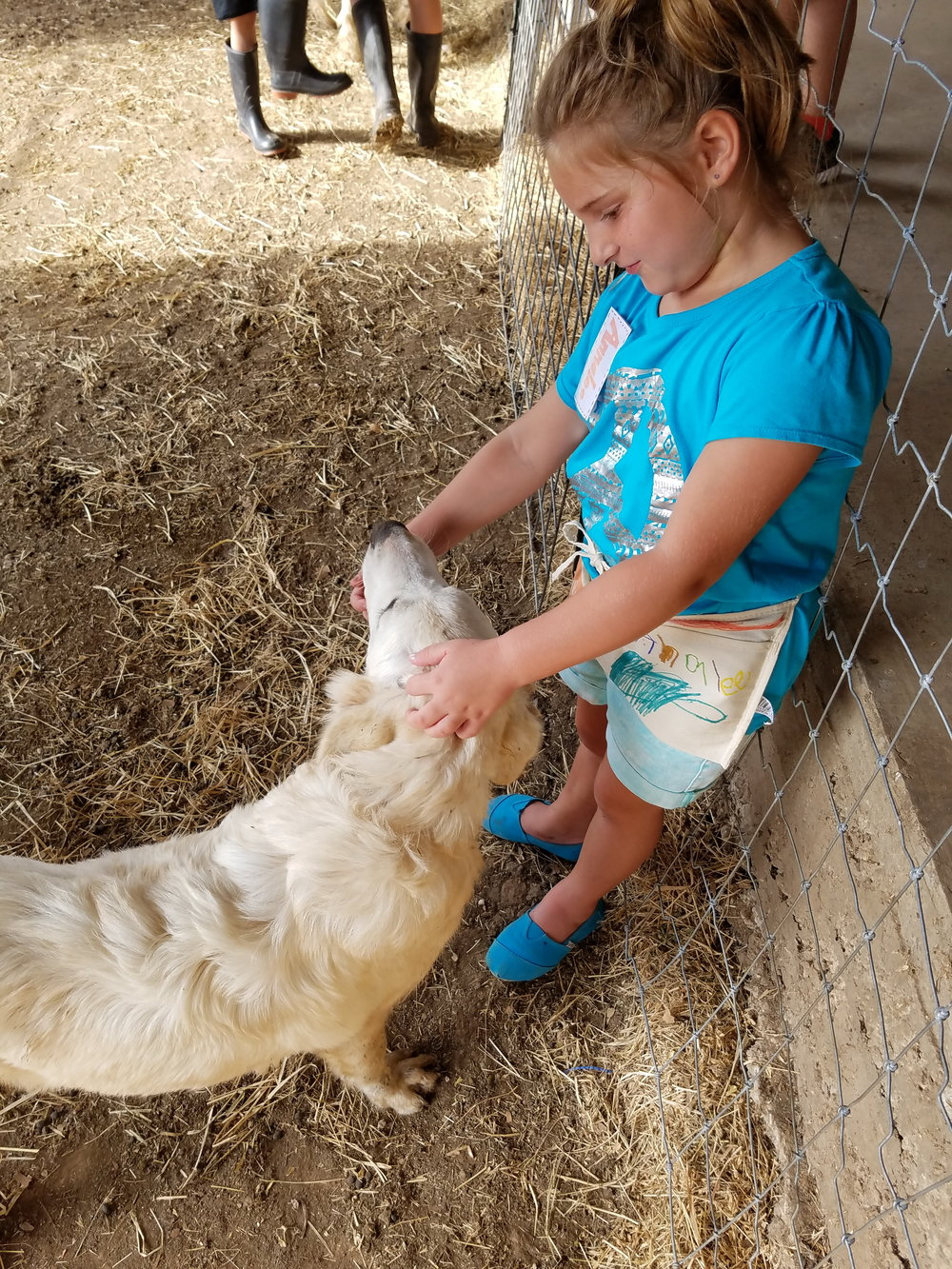 The farm dogs are not pets, but they still love attention when they can get it. They very much enjoy when little people visit the farm.