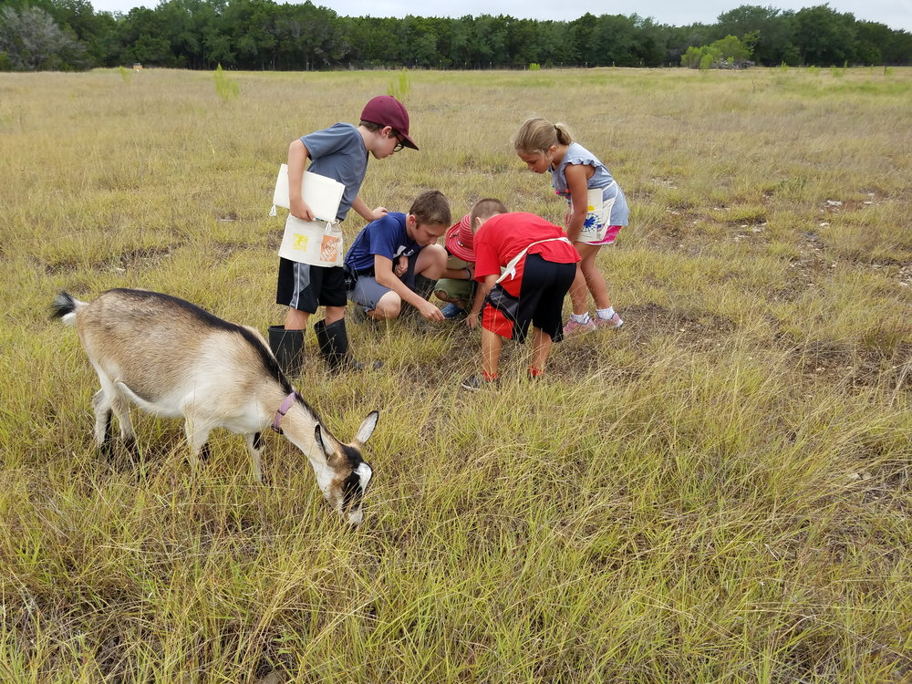 New discoveries by humans and goats. At first glance it just looked like a lot of land with some grass. After practicing awareness, the children learned the importance of looking for the unexpected and unusual to cross their paths.