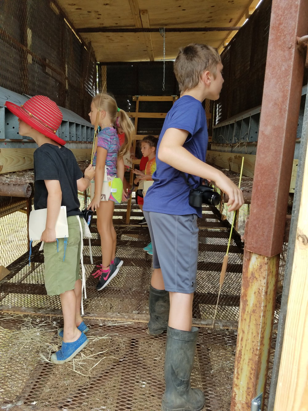 We are on egg watch as we wait for the pullets to lay eggs any day now in the mobile chicken coop.