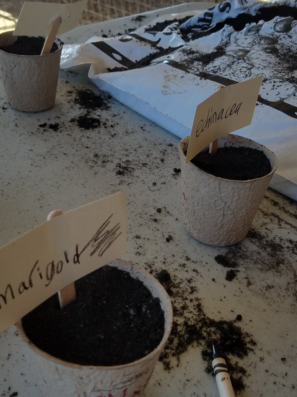 Lots of fine motor skills in action with this simple seed planting activity.