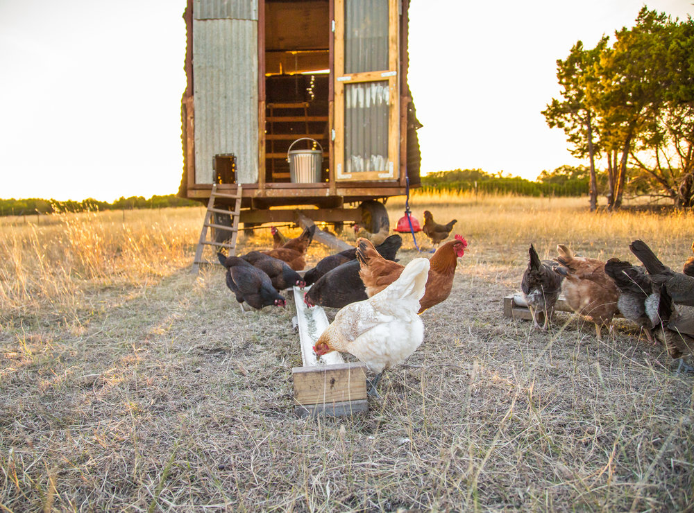 Hills of Milk and Honey Mobile Chicken Coop