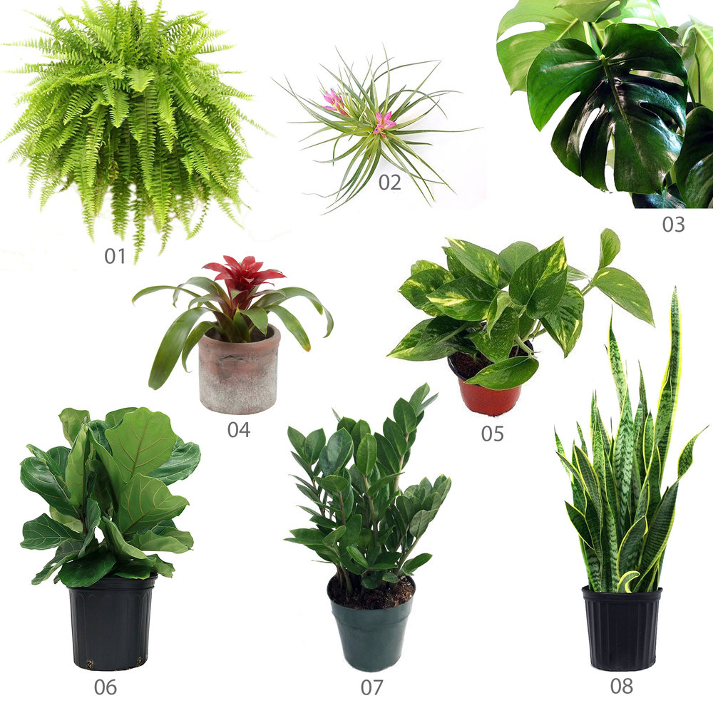 The Unexpected Source for Houseplants