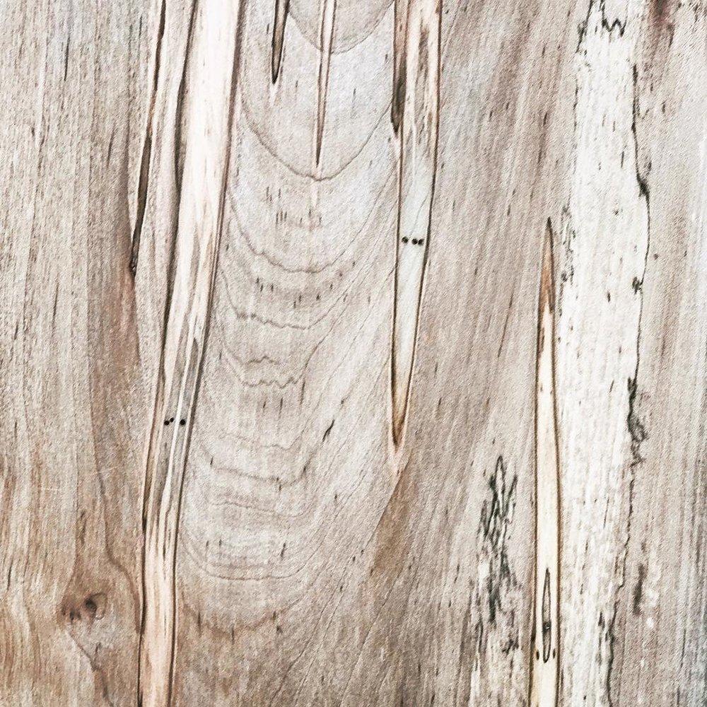Design Primer: Ambrosia Maple