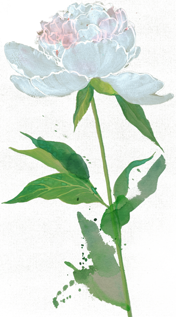 Re-sized-flower-copy.png