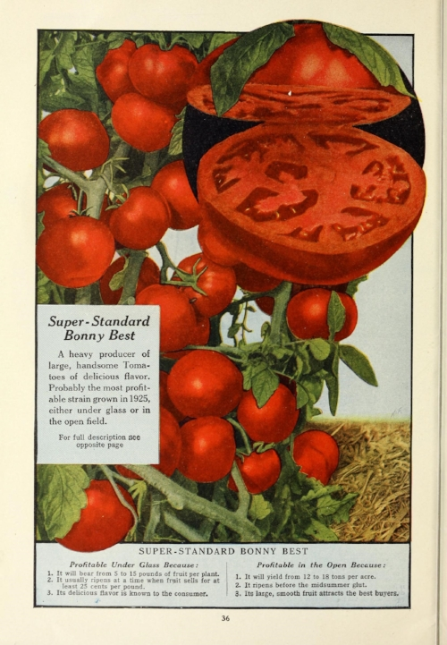 Ad for Super-Standard Bonny Best tomatoes. From 112 Superb Varieties for Market Gardeners (Philadelphia: Francis C. Stokes & Co., 1926). Image courtesy of National Agricultural Library and Biodiversity Heritage Library.