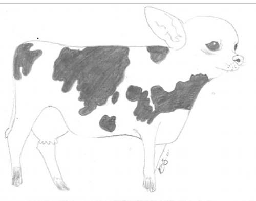 chiwowcow.png