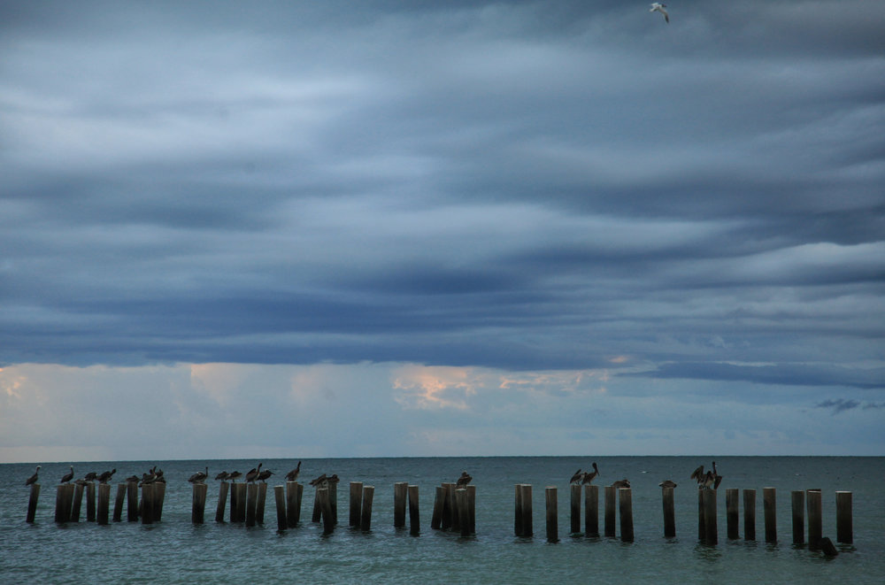 4 Naples Pelican Pier across_9141.jpg
