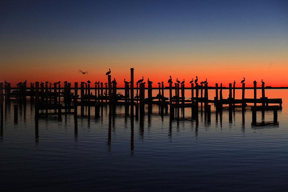9 Bary_Greff_Pelicans_Ocean_Views.jpg