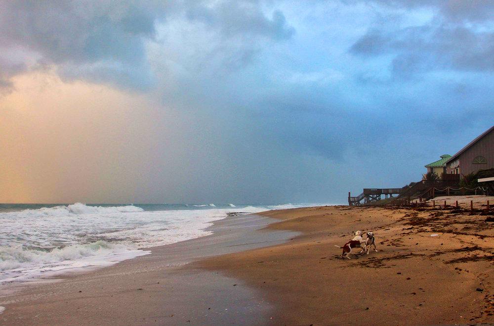 19  Barry_Greff_Dogfight_Ocean_Views.jpg