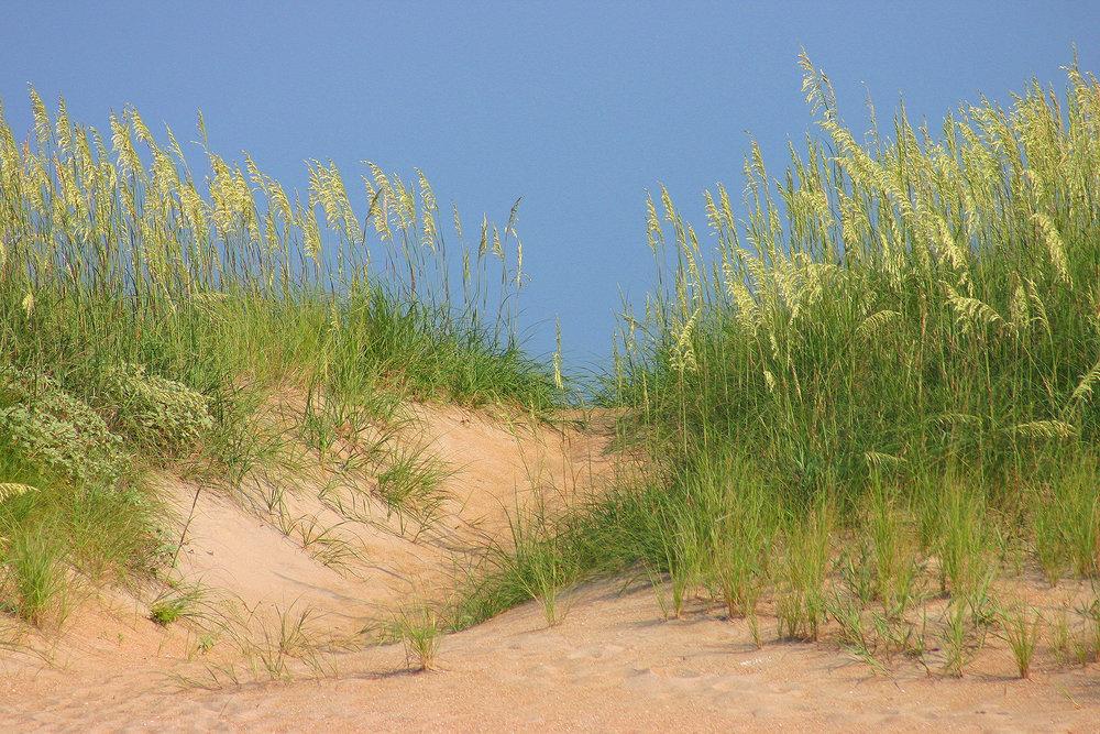 21 Barry_Greff_Seagrass_Ocean_Views.jpg