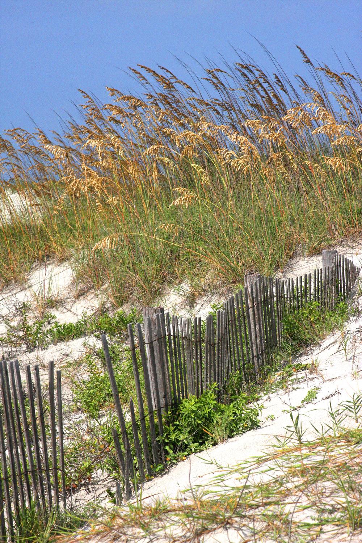 32 Barry_Greff_Dune_Ocean_Views.jpg