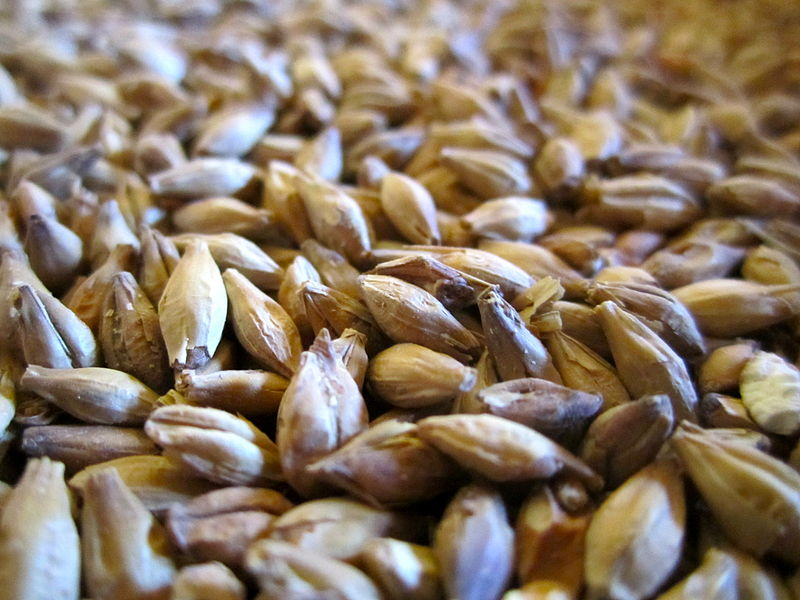 <malt> - At Open Source Brewing, we like to brew with local, high-quality ingredients. Gladfield Malt in Canterbury produces the high quality craft malts that we use in our beer. Check out https://www.gladfieldmalt.co.nz/ to see Gladfield's variety of malts.