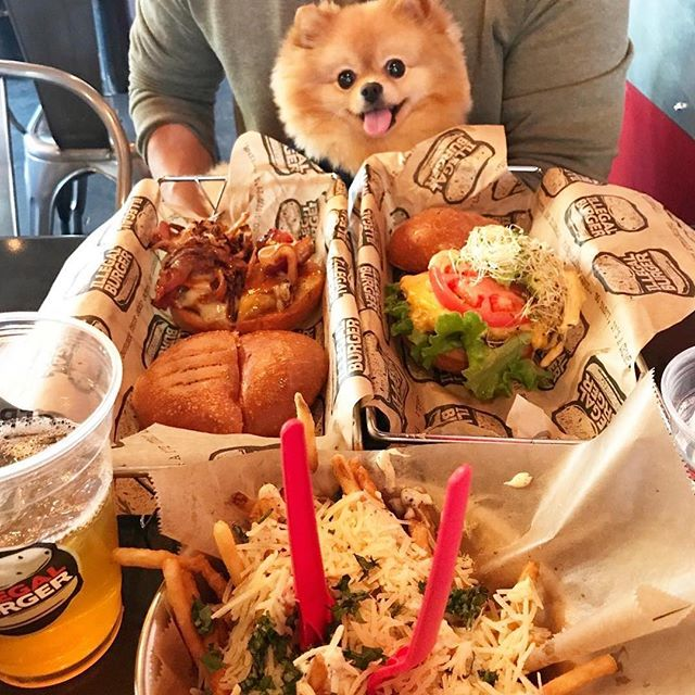 @hi_im_chewie had so much fun on our patio! What feast would you like to see from Illegal Burger? ・・・ On a date with my pawrents. Third wheel, again 😜✌🏼♥️😎 🍔#foodie #foodporn #hamburger #lunch #thirdwheel #illegalburger #saturday #weekend #burger #foodforfoodies #dailyfoodfeed #nomnom #denver