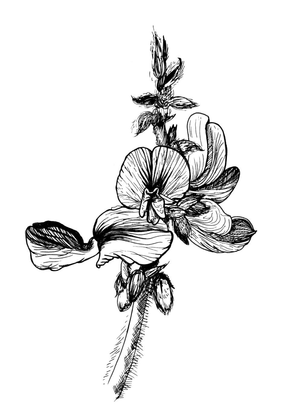 Orchid_CostaRica_Jan20_2017 copy.jpg
