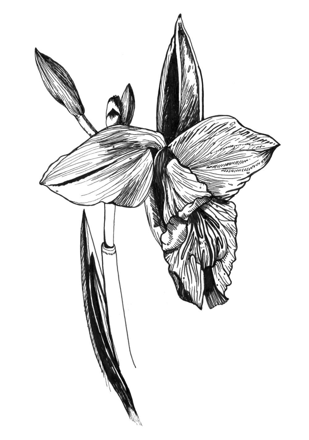 Orchid_CostaRica_Jan14_2017 copy.jpg